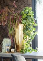 Catalogues et collections Rapid'Flore : Découvrez les plantes retombantes