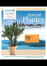 Prospectus E.Leclerc : Spécial plantes méditérranéennes
